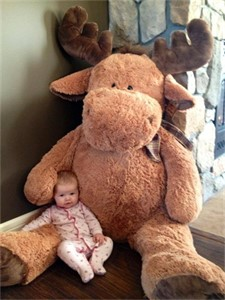March 24th 2014, BERK'S FRIST TEDDY MOOSE